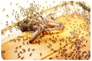 屏農白蟻除蟲公司,成立於大高雄超過數十年,擁有專業除蟲執照,我們營業項目對於媒防治消毒工程、白蟻防治工程、蟑螂防治工程、跳蚤防治工程、老鼠防治工程