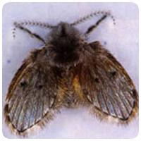 蛾蚋-屏農白蟻除蟲公司,成立於大高雄超過數十年,擁有專業除蟲執照,我們營業項目對於媒防治消毒工程、白蟻防治工程、蟑螂防治工程、跳蚤防治工程、老鼠防治工程