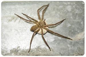 蜘蛛-屏農白蟻除蟲公司,成立於大高雄超過數十年,擁有專業除蟲執照,我們營業項目對於媒防治消毒工程、白蟻防治工程、蟑螂防治工程、跳蚤防治工程、老鼠防治工程